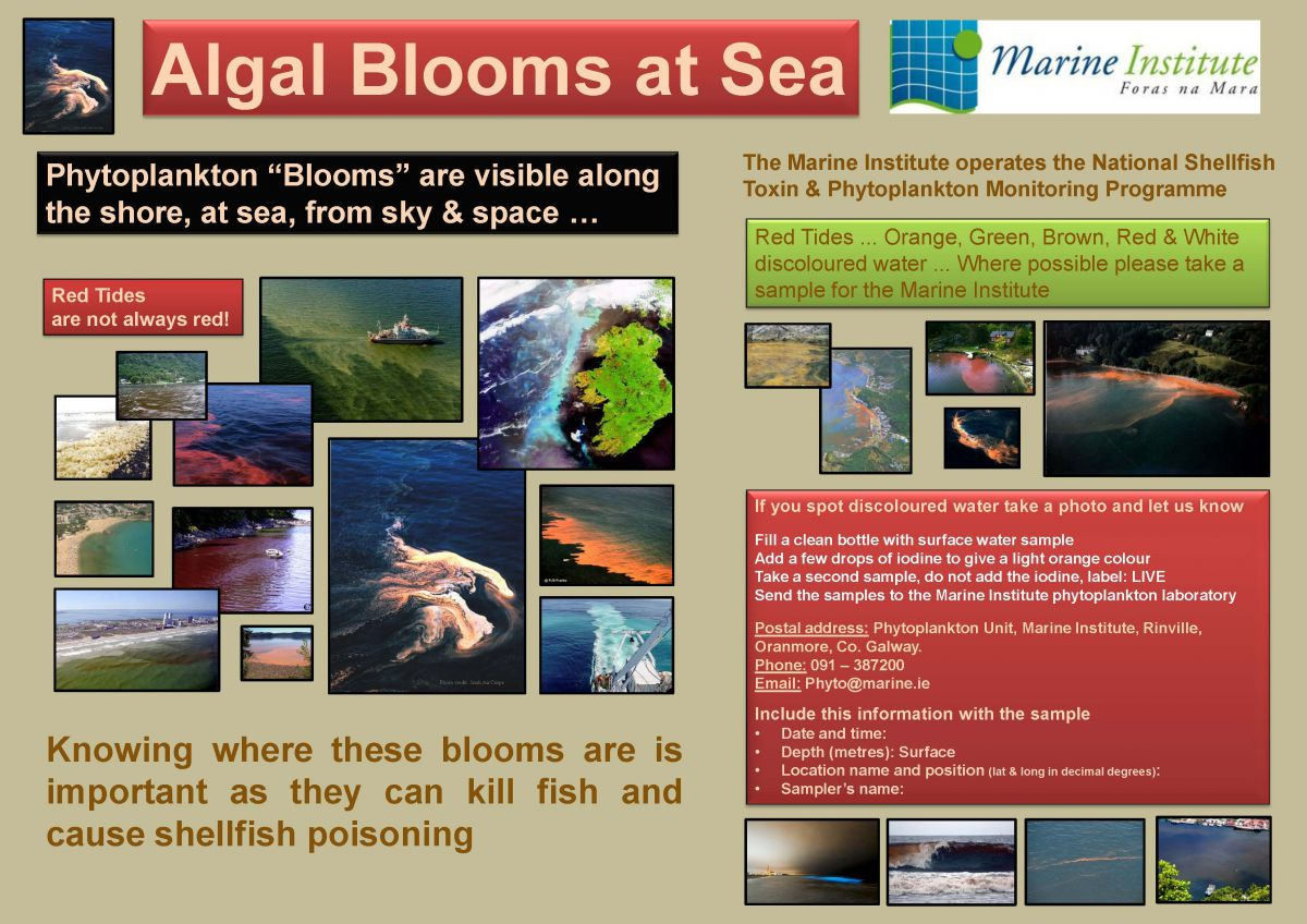Picture showing the colours of Algal Blooms at sea. Photo credits: See list below image