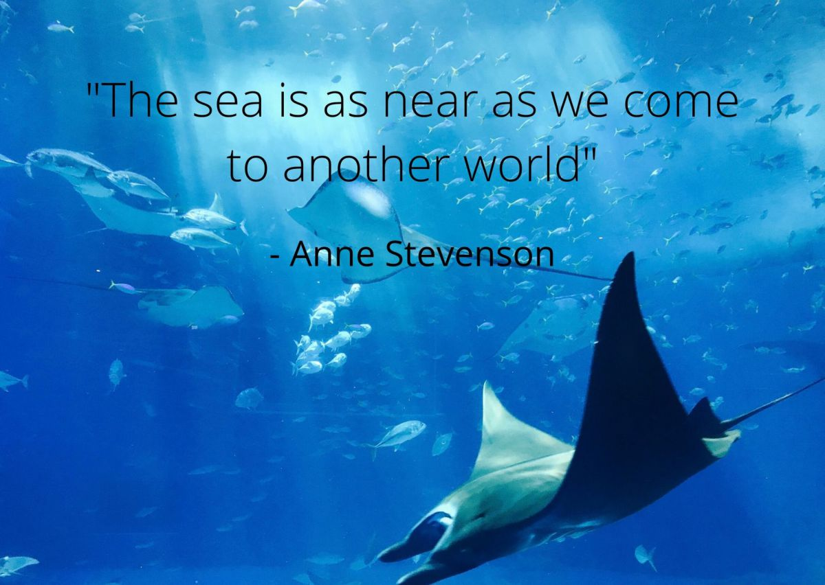 Quote by Anne Stevenson