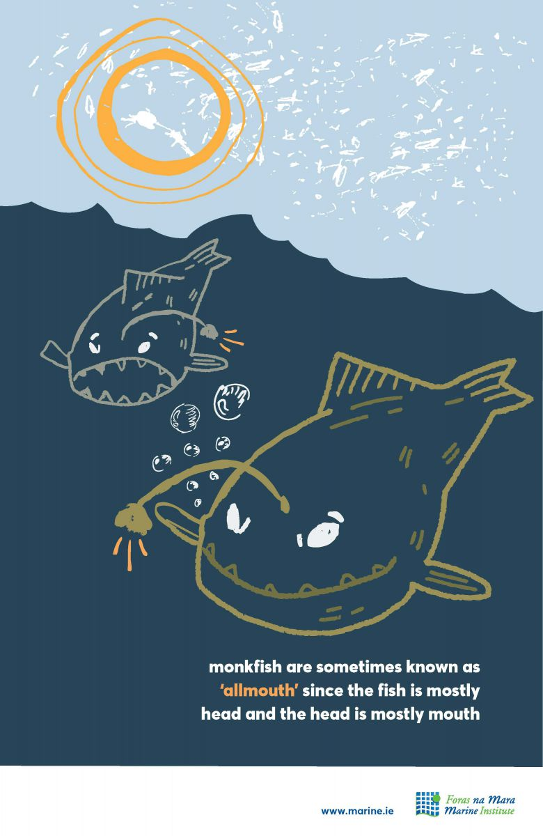 Monkfish Marine Fact