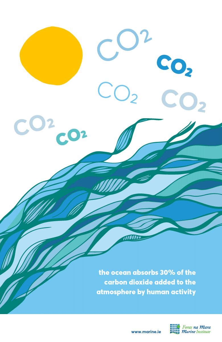 Carbon Dioxide Marine Fact