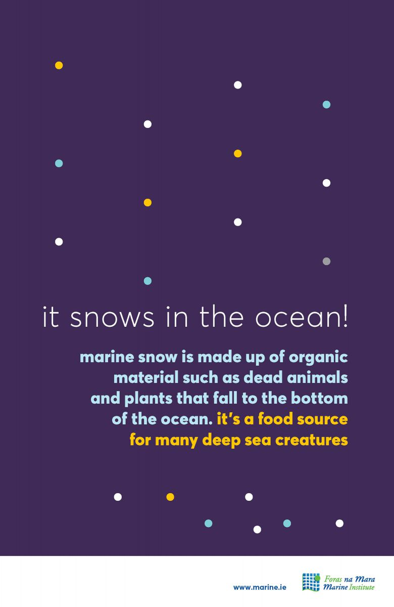 Marine snow marine fact