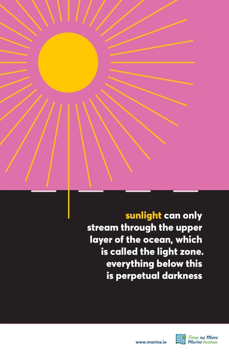 Sunlight Marine Fact