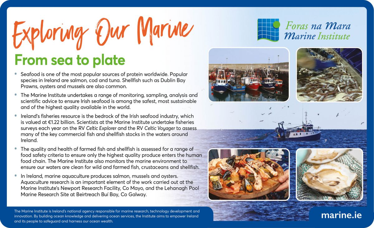 Exploring Our Marine - From sea to plate
