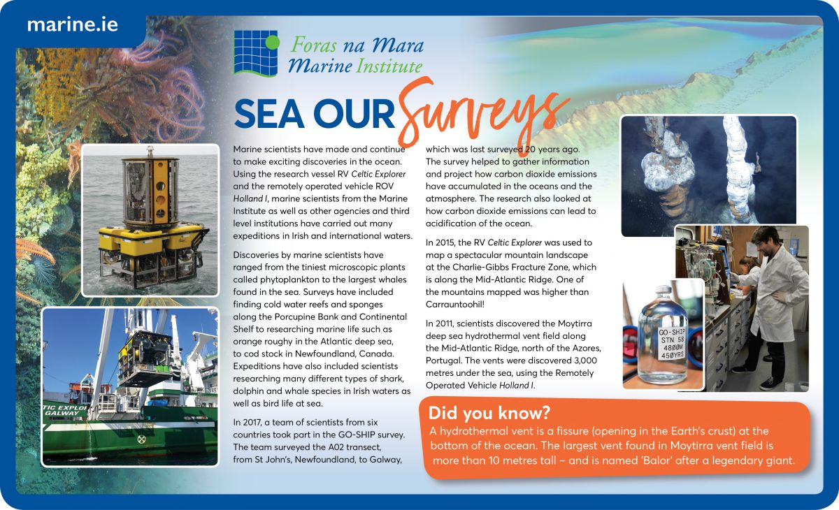 Sea our Survey's Infographic