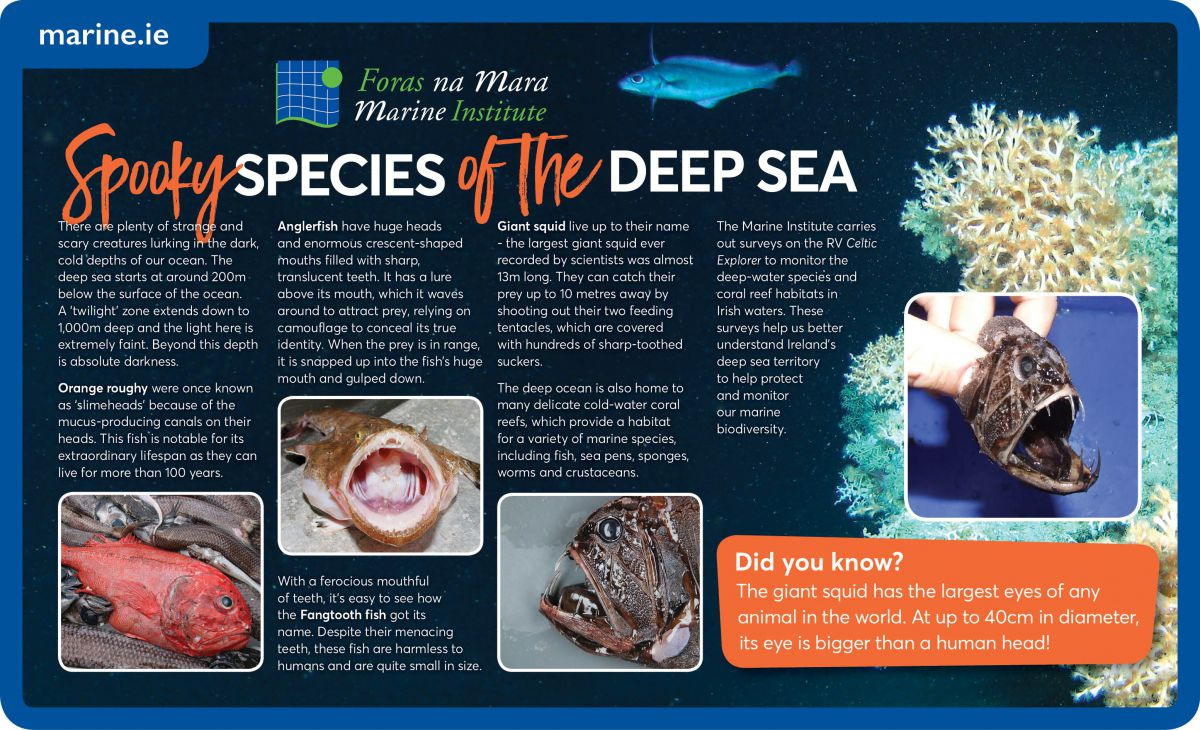Deep Sea Species Infographics
