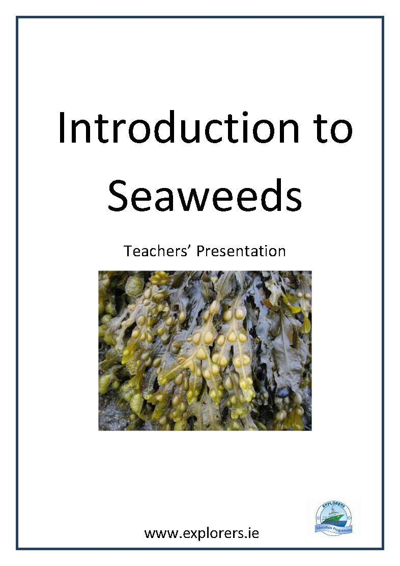 Introduction to Seaweed cover
