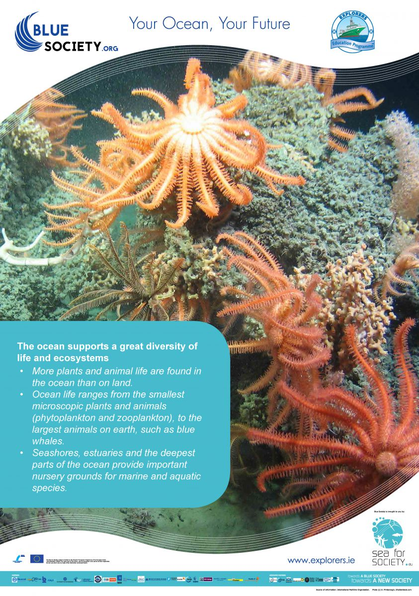 Ocean Literacy Poster The ocean supports a great diversity of life and ecosystems