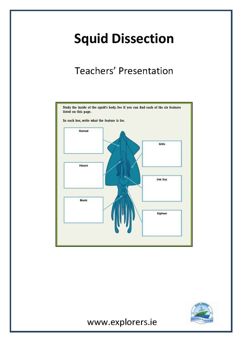 worksheet Squid Dissection Worksheet teachers resources marine institute squid dissection cover page