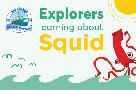 Explorers Learning about Squid