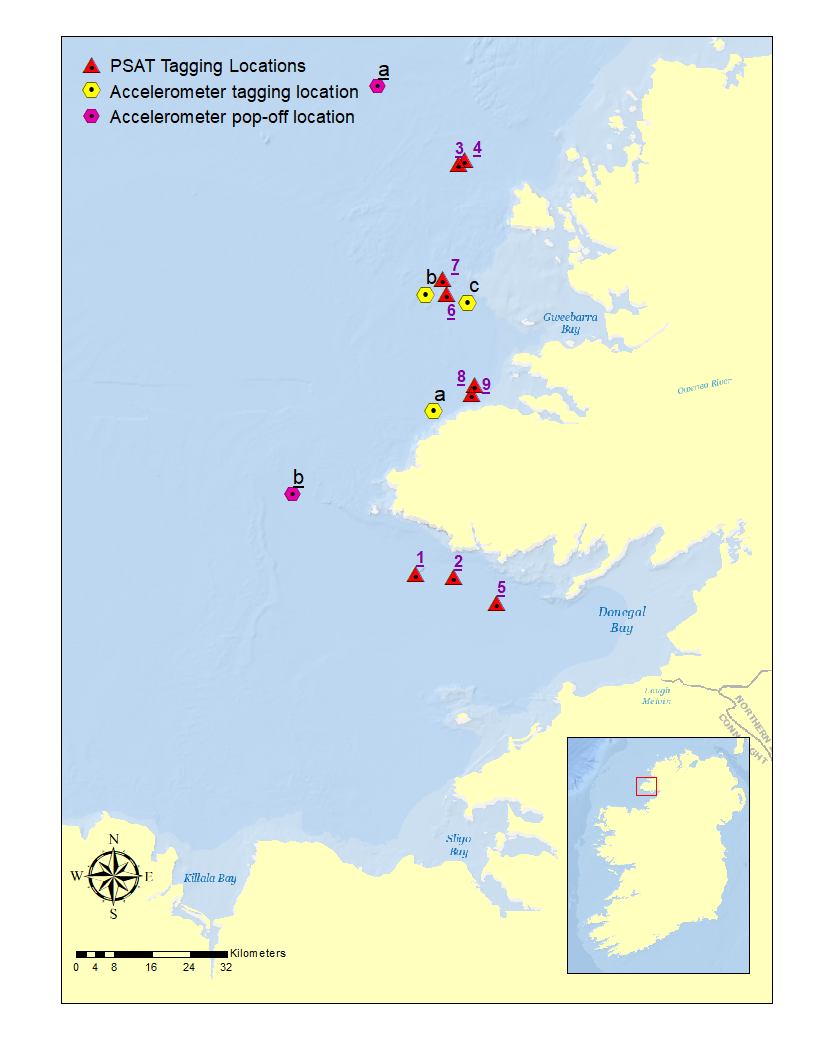 Map of tagging locations for the 2017 tagging effort in Donegal Bay, Ireland. Map Credit to Hugo Maxwell, Marine Institute.