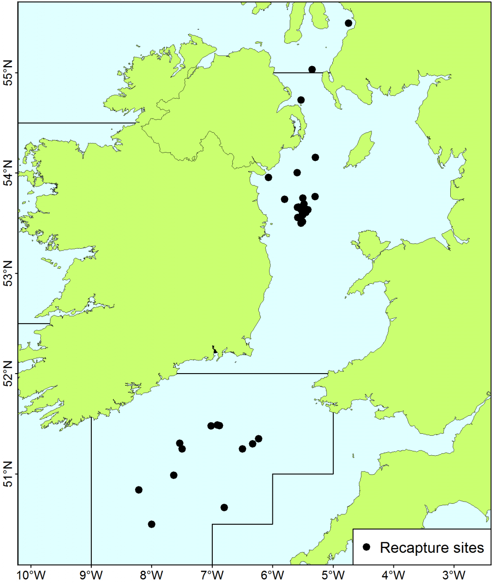 Recapture sites of tagged cod from the Irish Sea, Celtic Sea & North Channel