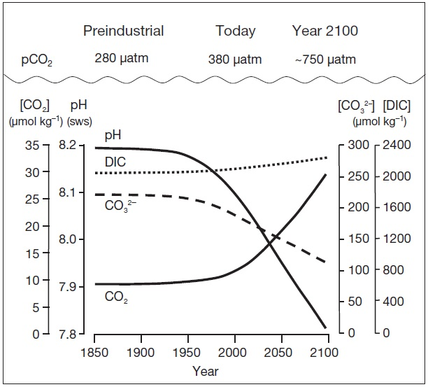 Changing ocean carbonate concentrations and pH since pre-industrial times. Graphic courtesy of