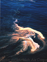 Photo of offshore redtide south east Ireland.