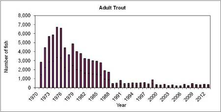 Adult Trout Returns since 1970 at Marine Institute, Newport