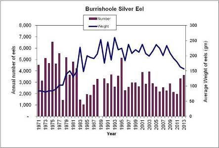 Burrishoole Silver Eel Catches since 1971
