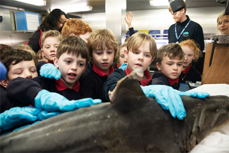 Rang 2 primary school children from Scoil Shéamais Naofa, Bearna got up close with fish and shark species on the RV Celtic Explorer as part of the Marine Institute's Explorers Education Programme. Students touch the skin of a tope shark. Photo: Andrew Downes, Xposure