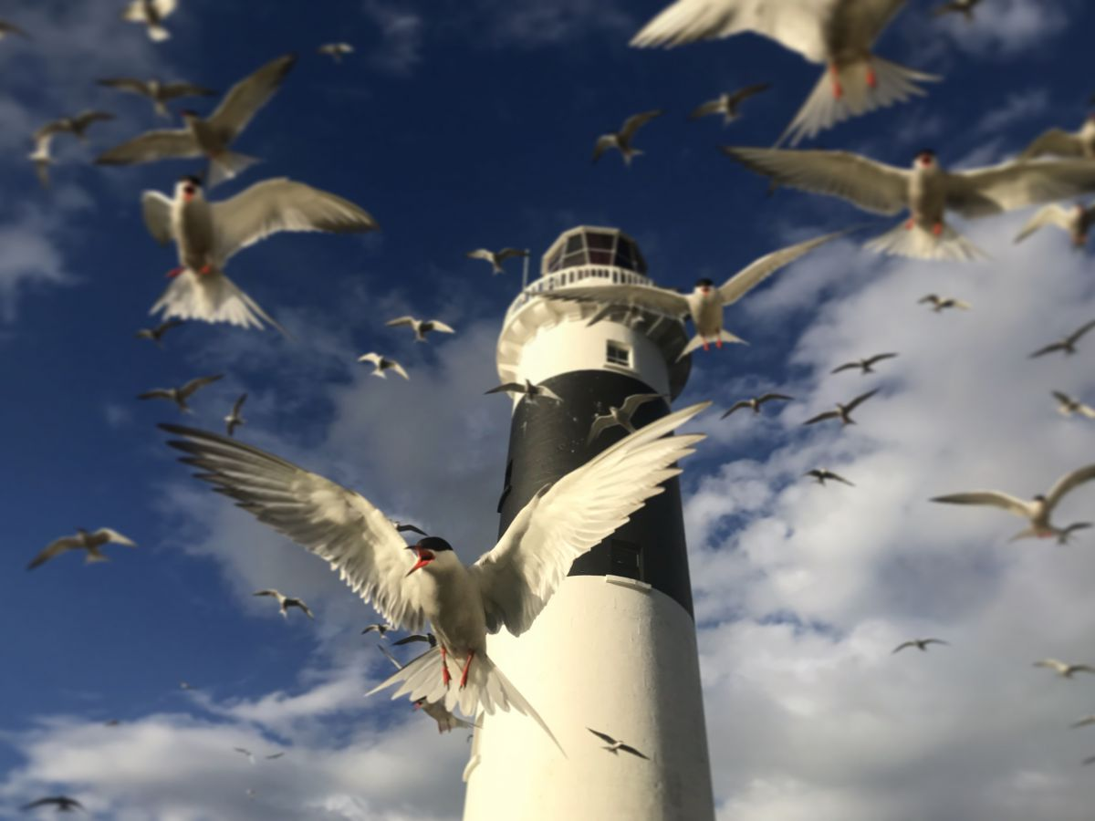 Andrew Power - Cullen Fellowship research on contaminants in seabird eggs.