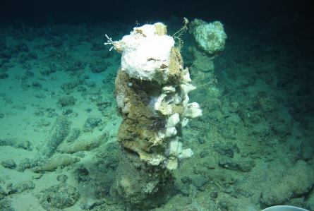 "Two of many standing chimneys at ""Chimney Henge"". Note the large number of fallen chimneys littering the sea floor. The standing chimneys are covered in marine sponges. Image courtesy of Marine Institute & Dr Jens Carlsson, UCD. The Deep-Links expedition is supported by the Marine Institute, funded under the Marine Research Programme 2014-2020 by the Irish Government."