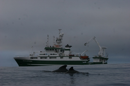 Photograph of   Long-finned Pilot Whales swimming infront of the RV Celtic Explorer, by Dr. Joanne O'Brien