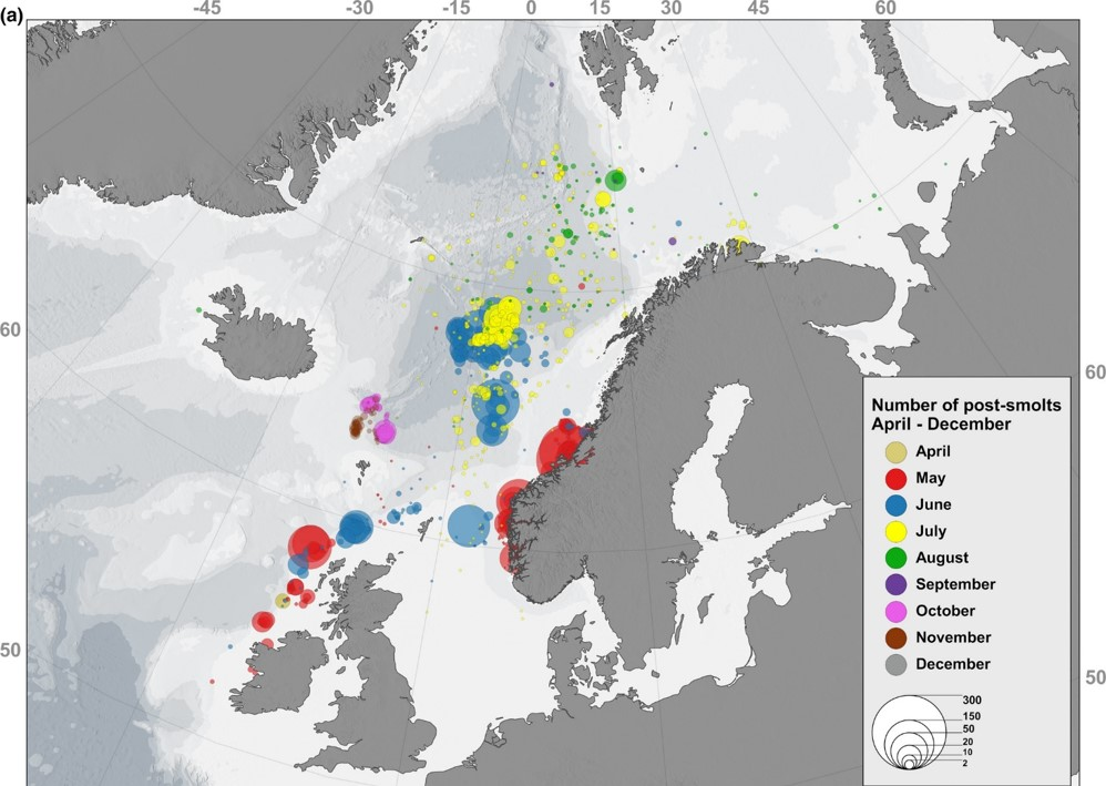 Post-smolt captures over all months showing location of aggregations