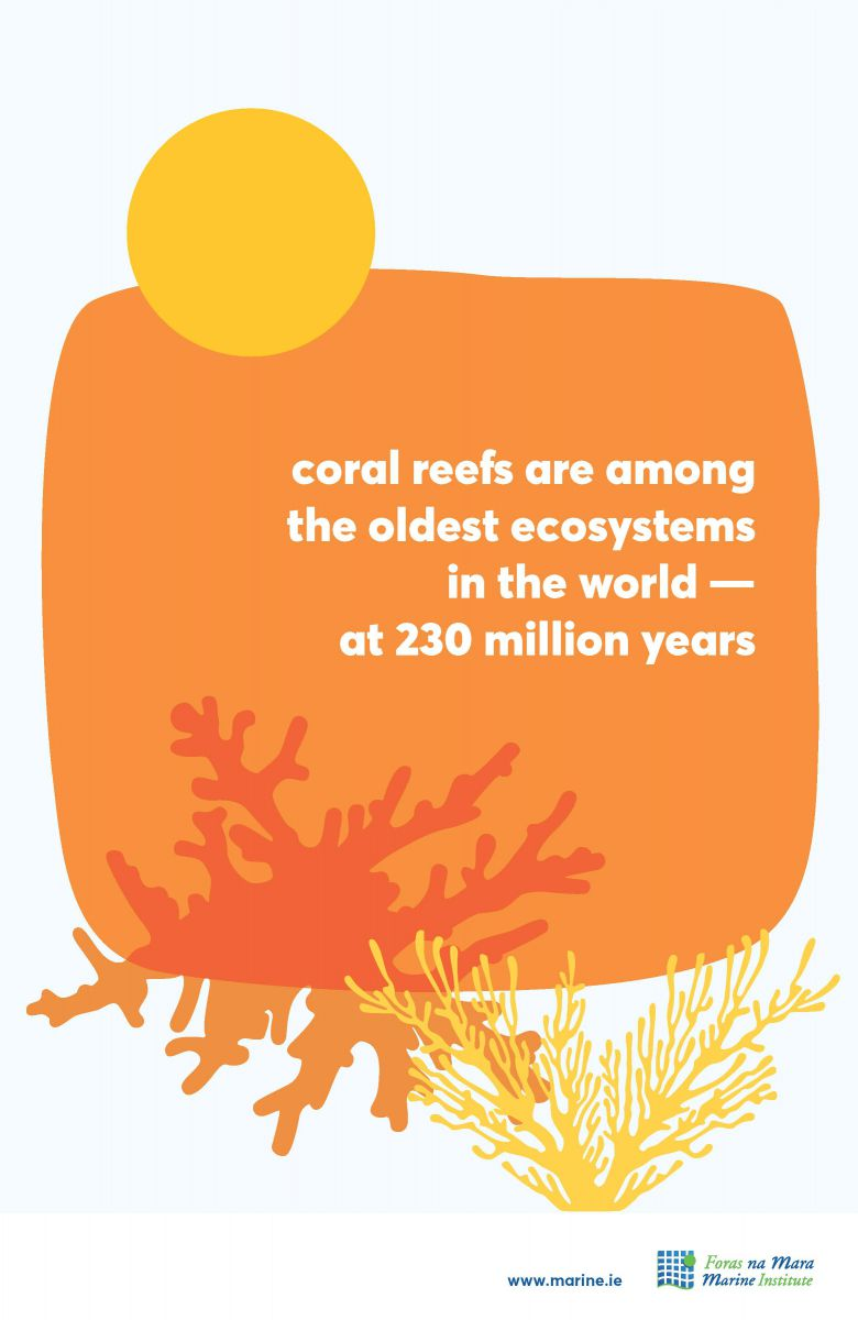 Coral Reefs marine fact
