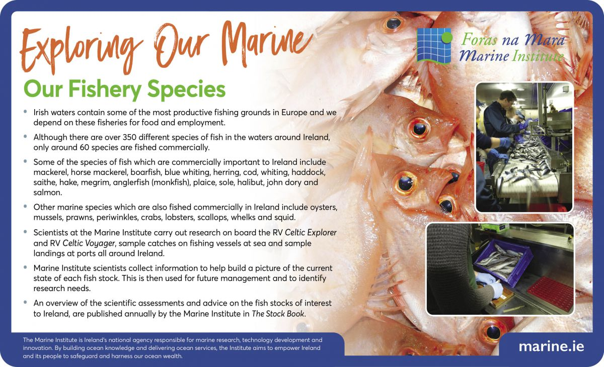 Exploring Our Marine with the Marine Institute - Our Fishery Species