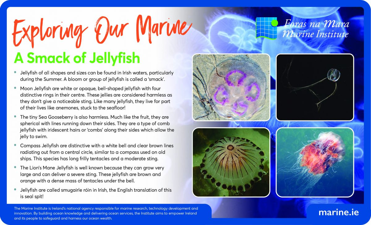 Exploring Our Marine with the Marine Institute - Jellyfish