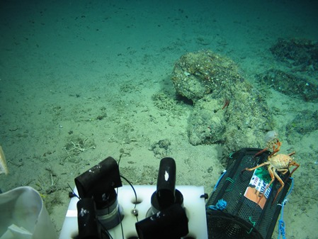 """Deep Links Survey in the Gulf of Cadiz, November 2015. Two of many standing chimneys at """"Chimney Henge"""". Note the large number of fallen chimneys littering the sea floor. The standing chimneys are covered in marine sponges. Image courtesy of Marine Institute & Dr Jens Carlsson, UCD. The Deep-Links expedition is supported by the Marine Institute, funded under the Marine Research Programme 2014-2020 by the Irish Government."""
