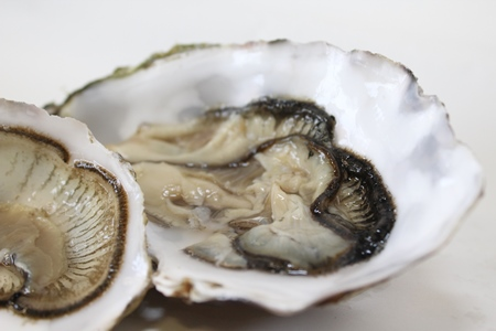 World's first shellfish traceability tool launched by research consortium. Photo Fionn O Fearghail, Marine Institute.