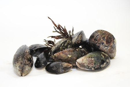 Shellfish toxicity - Warning advice remains in place for recreational gathering of shellfish