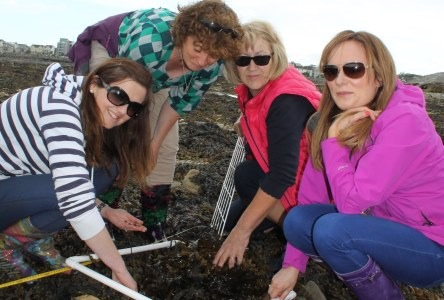 Primary school teachers use quadrants to search for marine life on Gratton Beach during Explorers Teacher Training Workshop 2015 run by the Marine Institute and Galway Atlantaquaria