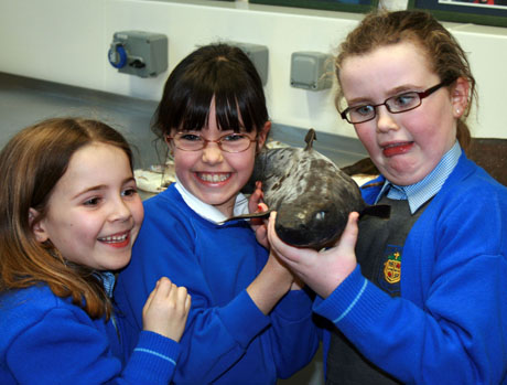 """""""Who's your friend?"""" Three young actors from The Wizard of Oz examine a deepwater shark during a visit to the Marine Institute, Oranmore."""
