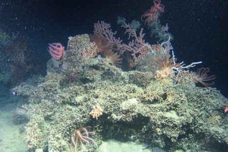 Discovering cold-water corals and sponges off the Irish continental shelf.