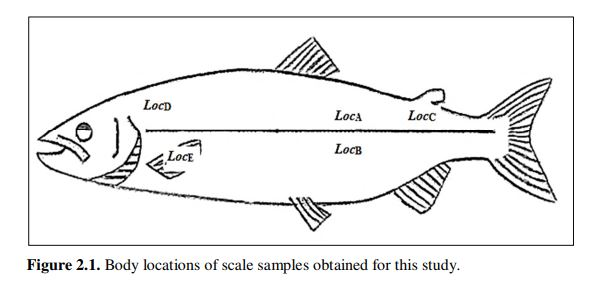 Body locations of scale samples obtained for this study