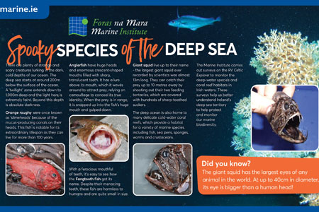 Exploring our marine - Spooky species of the deep sea