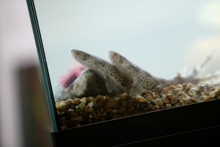 Explorers Aquarium in Class. Photographer Jason Clarke