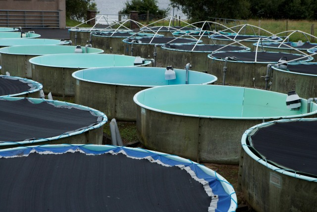 NCF Fish rearing. Photographer David Branigan