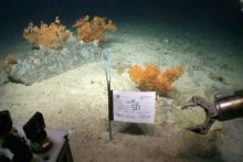 Ireland demonstrates its ability to understand cutting-edge research in extreme environments during the Controls of Coldwater Coral Habitats in Submarine Canyons II (CoCoHaCa2) survey led by UCC-led scientists on board the Marine Institute's RV Celtic Explorer