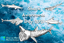 Celebrating Irish sharks of all shapes and sizes for Shark Awareness Day