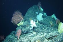 Marine scientists make new discoveries at Charlie-Gibbs Fracture Zone of the Mid-Atlantic Ridge on the Marine Institute's RV Celtic Explorer