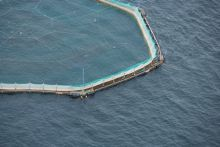 Aquaculture. Picture Credit to David Branigan.